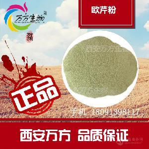 欧芹粉 欧芹叶 纯粉 厂家直销 食品级脱水蔬菜 品质保证