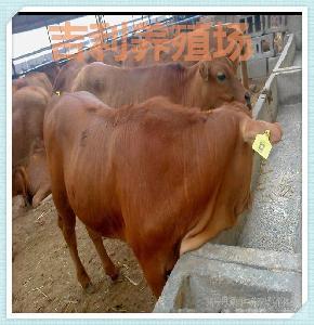 湖北省有养牛基地吗