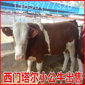 广西北海适合养牛吗