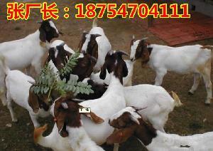 山羊价格多少钱一斤$山羊价格