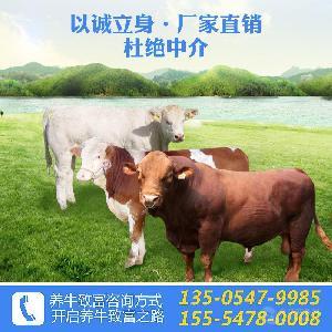鲁西黄牛多少钱一只