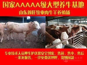 一头肉牛能赚多少钱