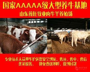 育肥牛利润怎么卖
