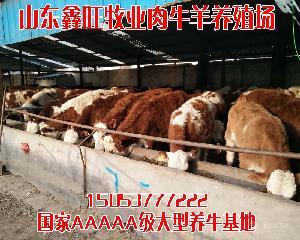 二百斤的小黄牛市场卖多少钱一头