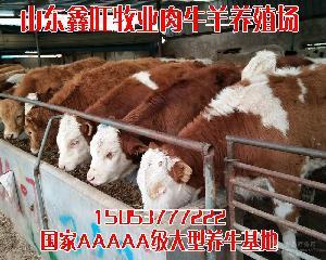 夏洛莱牛小牛价格安格斯