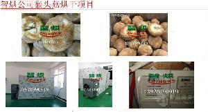 智烘猴头菇干燥房ZH-JN-HGJ03专业食用菌烘干工艺