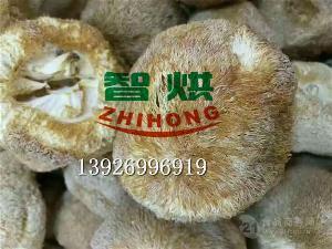 智烘牌猴头菇烘房生产商热泵食用菌烘干机