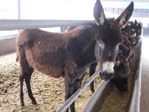 4个月的小驴苗价格多少钱