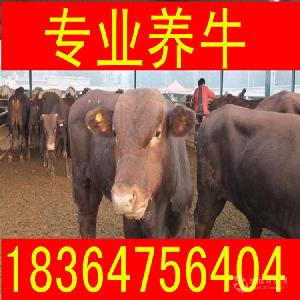 湖南省成年利木赞牛犊价格多少