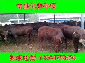 甘肃省大约200斤肉牛仔近期价格