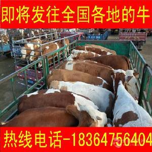 中国广东养牛基地包技术