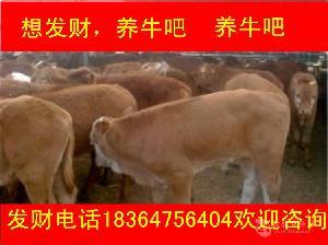重庆6个月利木赞黄牛近期价格