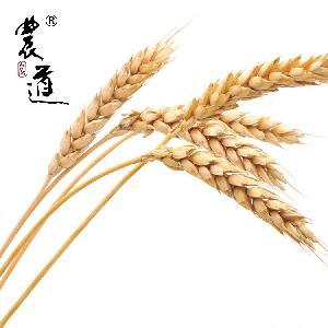 农道 散装绿色小麦 25公斤/袋 厂家直销