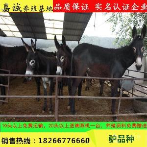 上海德州毛驴养殖场