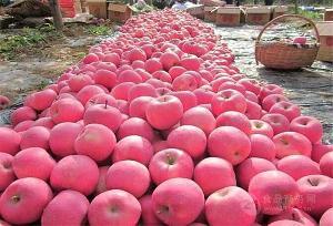 今日苹果价格行情查询