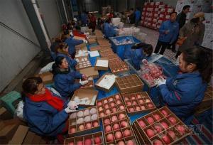 红富士苹果种植基地