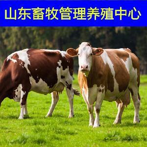 江西哪里卖小牛犊黄牛价格走势