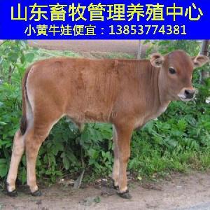 贵州大的养牛场