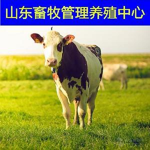 哪里出售小肉牛哪里肉牛牛苗便宜