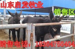 大约200斤的小肉驴价格多少批发