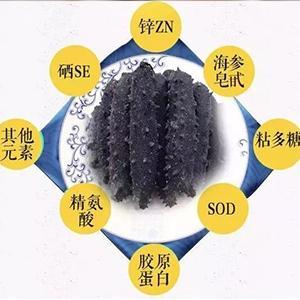 大连獐子岛鲜海参的做法与吃法红参批发价格