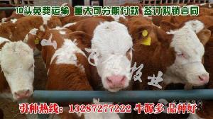 利木赞牛犊200斤左右一头多少钱