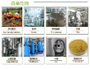 浩宇合作社 问荆提取物价格  有机硅7% 厂家直销 现货供应