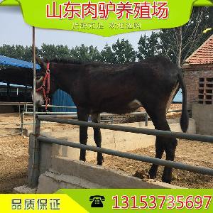 哪里卖小驴驹的价格便宜