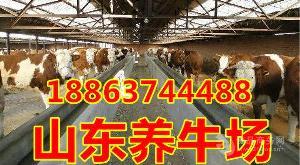 鲁西黄牛母牛犊价格多少