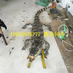 焦作鳄鱼养殖场鳄鱼品种有多少