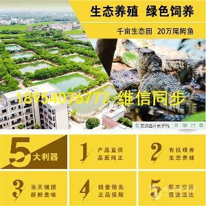 四川西昌市大型鳄鱼养殖基地鳄鱼水池建设图纸
