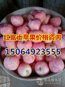 冷库红富士苹果均价*山东红富士苹果价格*山东冷库苹果价格