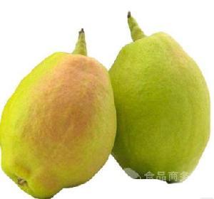 供应 现货整箱新鲜孕妇水果梨子脆甜多汁核小皮薄胜皇冠梨