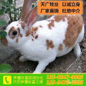 湖南獭兔价格