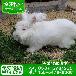 广东肉兔养殖场