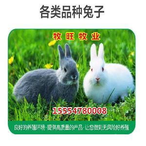 肉兔和獭兔的利润对比