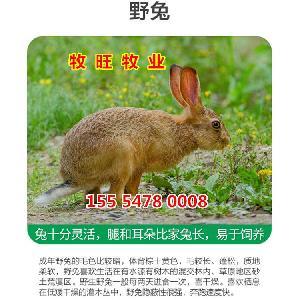 云南獭兔价格