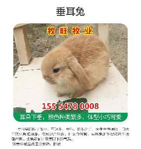 青海肉兔养殖场