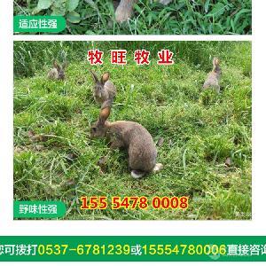 种兔养殖加盟