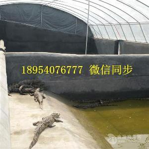 鳄鱼龟养殖场建设