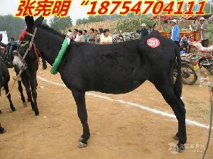 哪里的驴便宜肉驴驴苗价格小驴多少钱一头