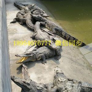 西安鳄鱼养殖场在线咨询