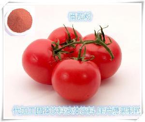 番茄浓缩粉 番茄粉 西红柿浓缩粉 QS厂家直销