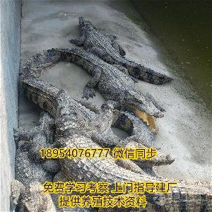 郓城鳄鱼养殖场品牌