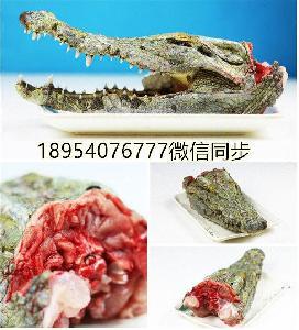 鳄鱼血米鳄鱼苗价格鳄鱼养殖场