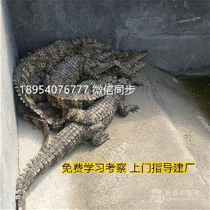 鳄鱼养殖投资