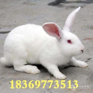 兔子养殖利润