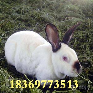 兔子养殖技术 肉兔养殖场 肉兔养殖利润 獭兔野兔巨型兔