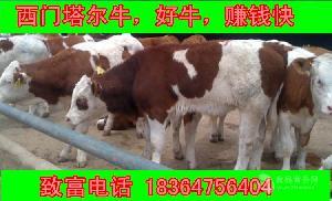 鲁西黄牛小种牛多少元