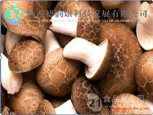 香菇提取物10:1陕西德润康